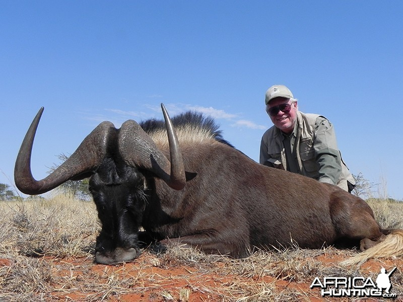 Black Wildebeest hunt with Wintershoek Johnny Vivier Safaris