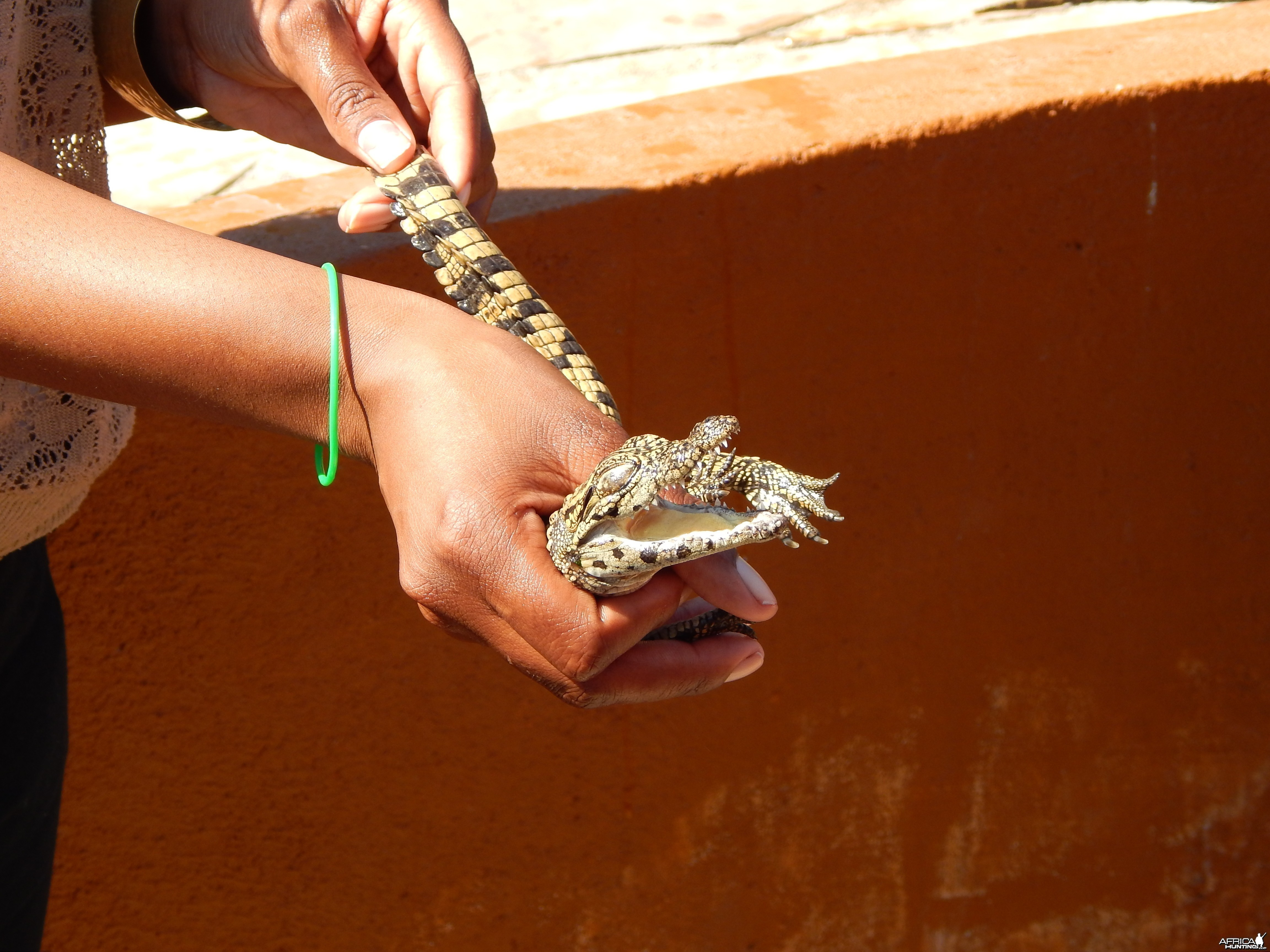 Crocodile Farm Otjiwarongo Namibia