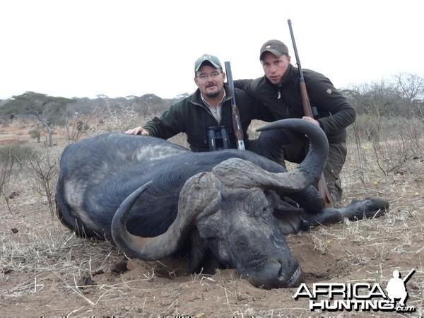 Masailand Buffalo