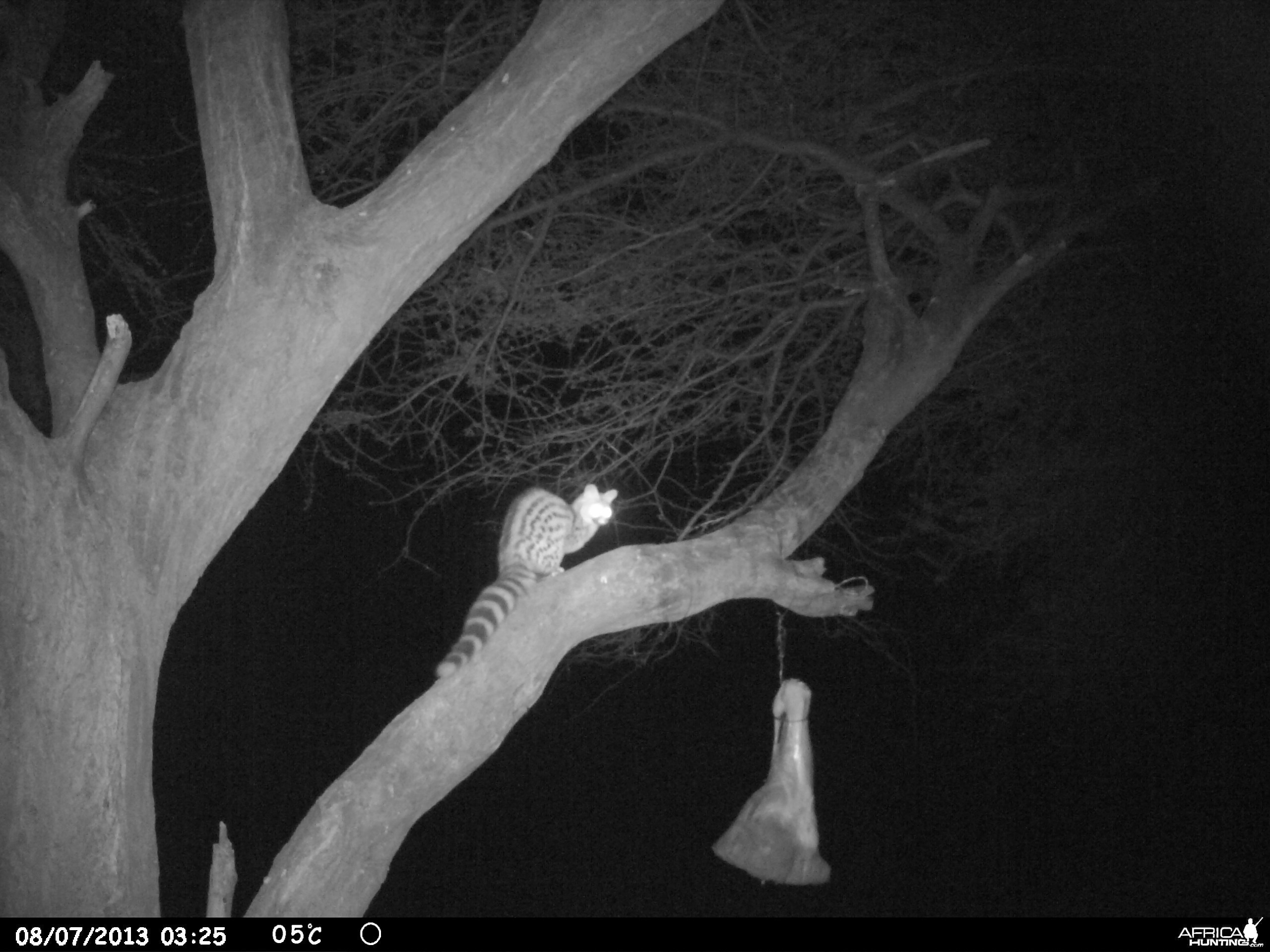 Genet Cat Trail Camera