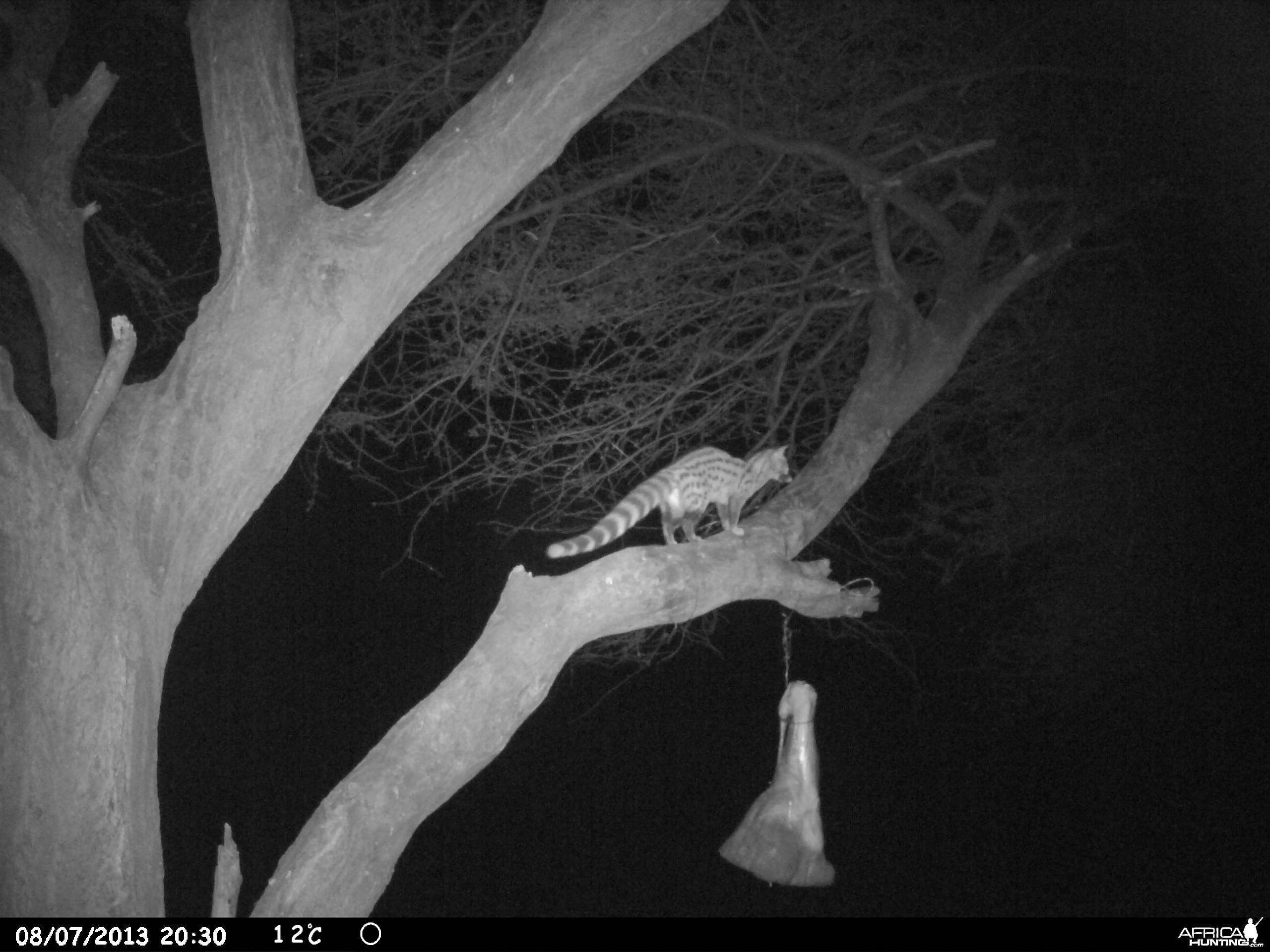Genet Cat Trail Camera