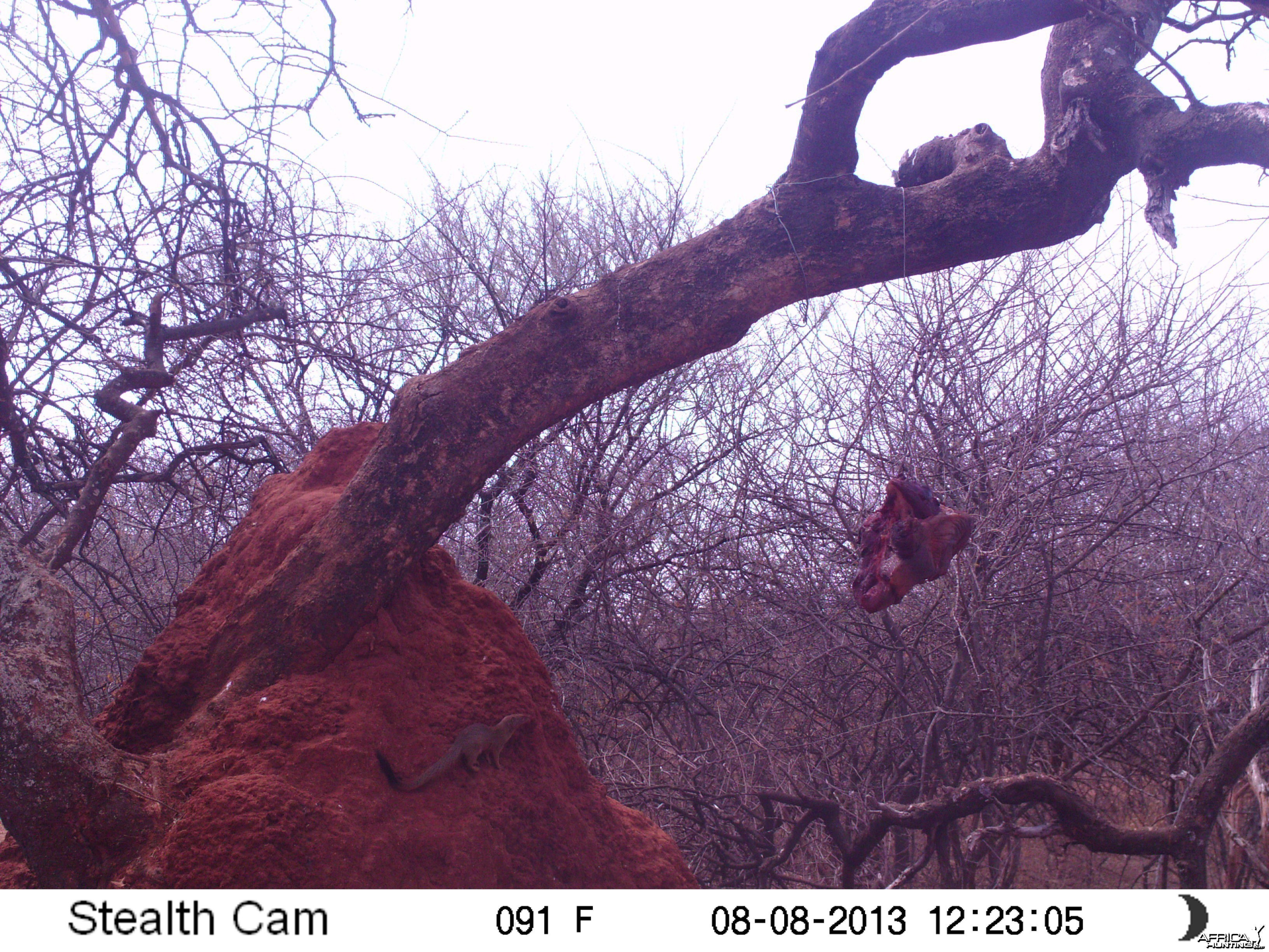 Red Mongoose Trail Camera