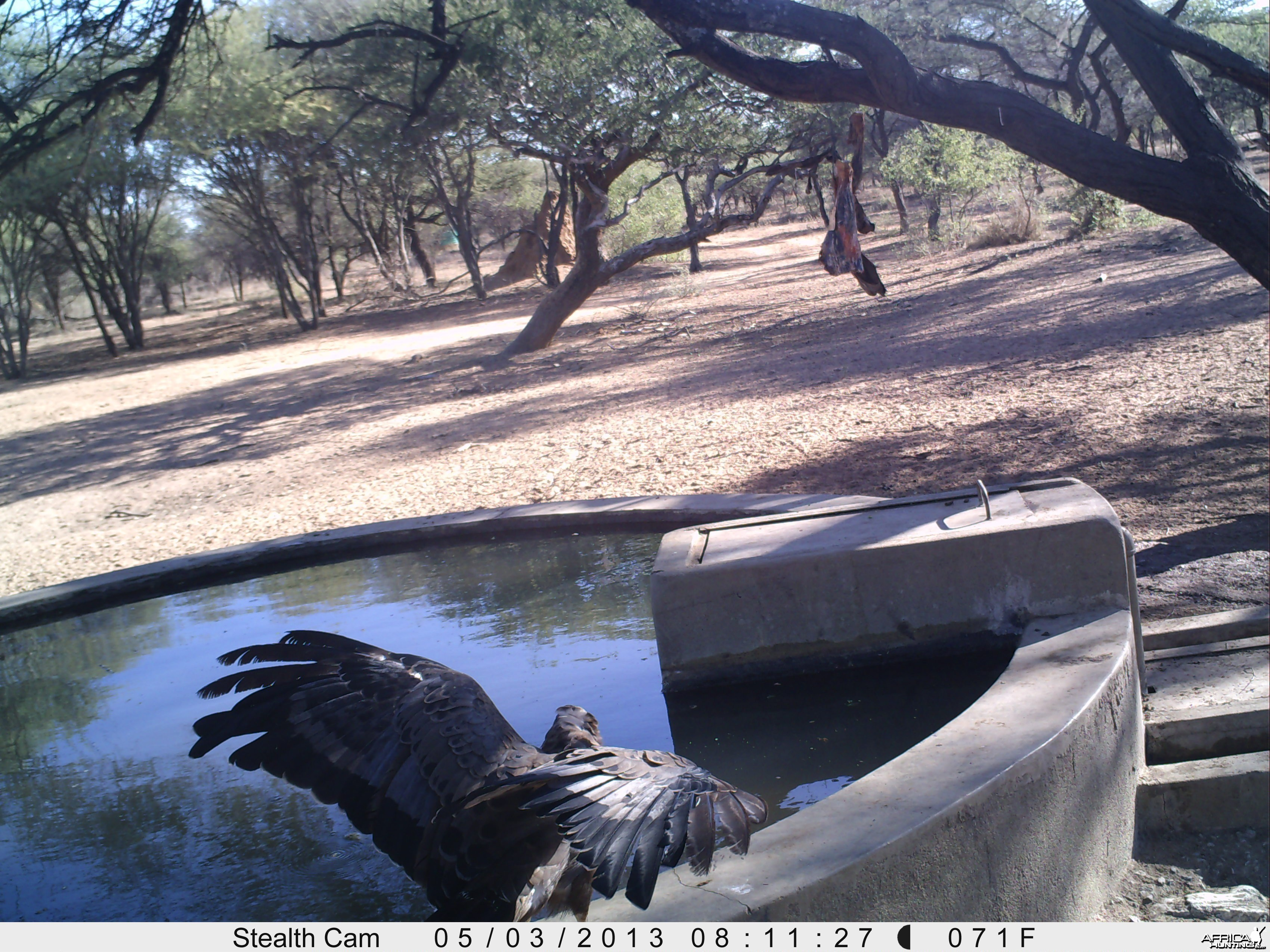 Bird of Prey Trail Camera