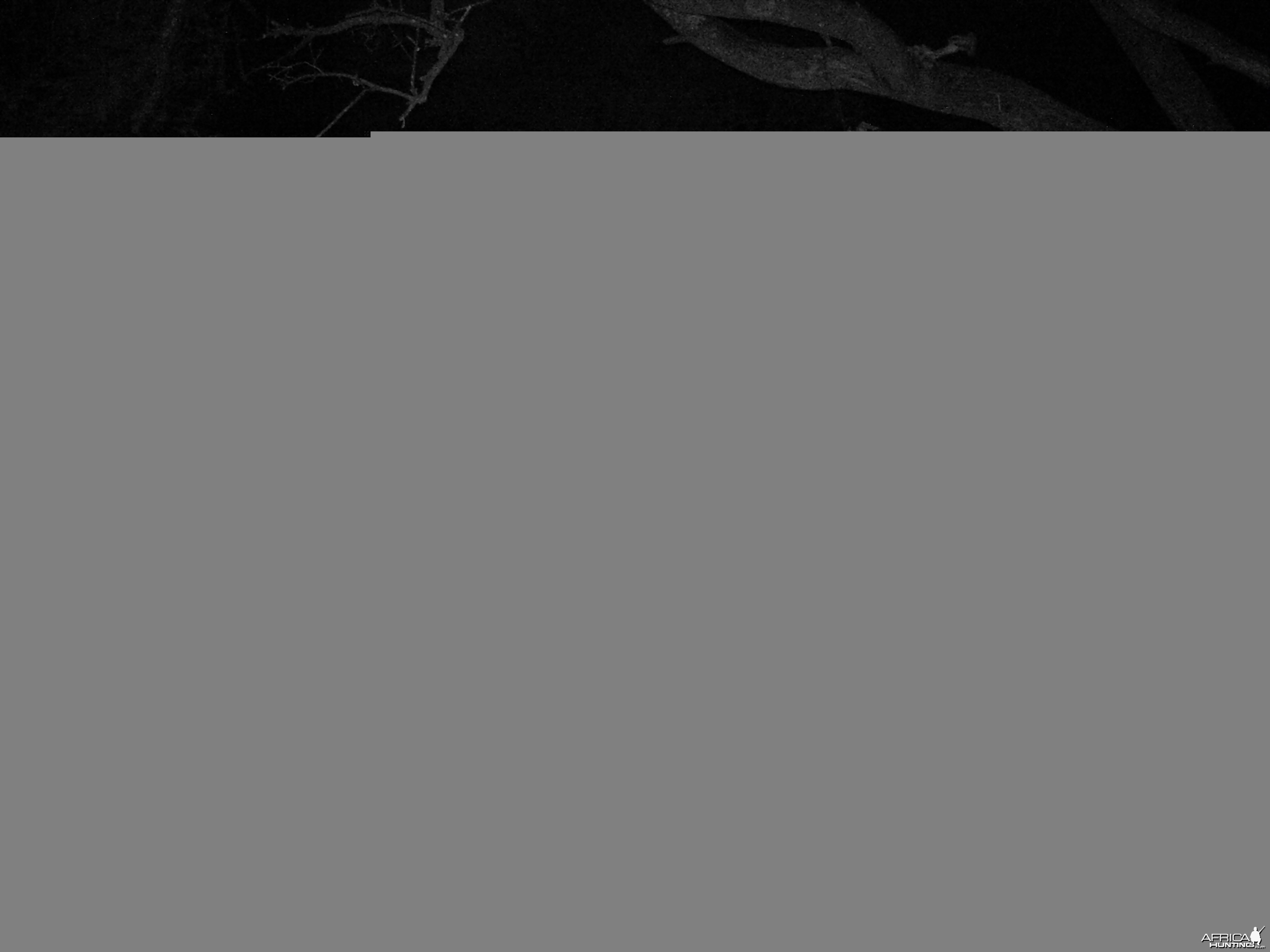 Brown Hyena Trail Camera