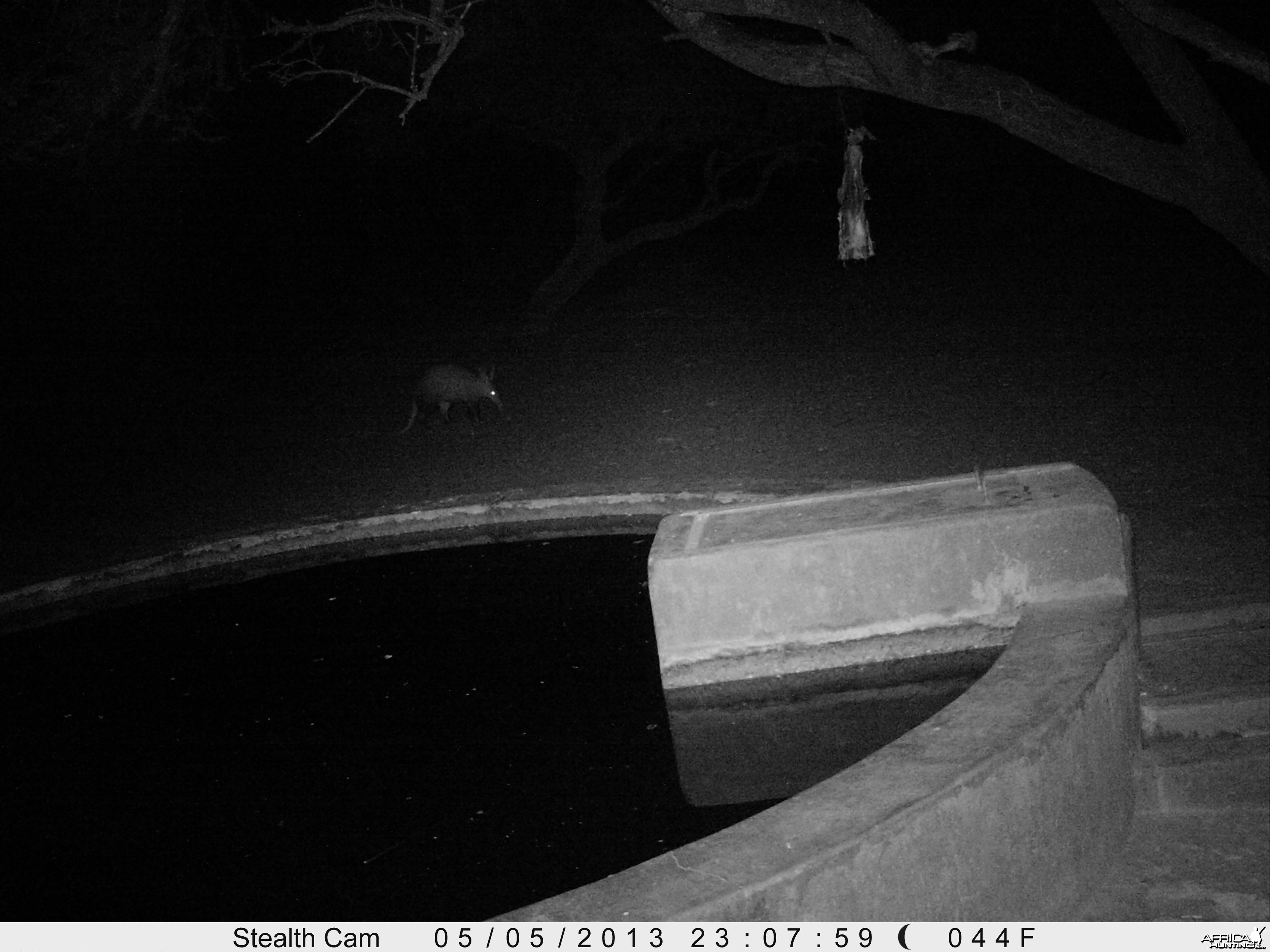 Aardvark or Antbear Trail Camera