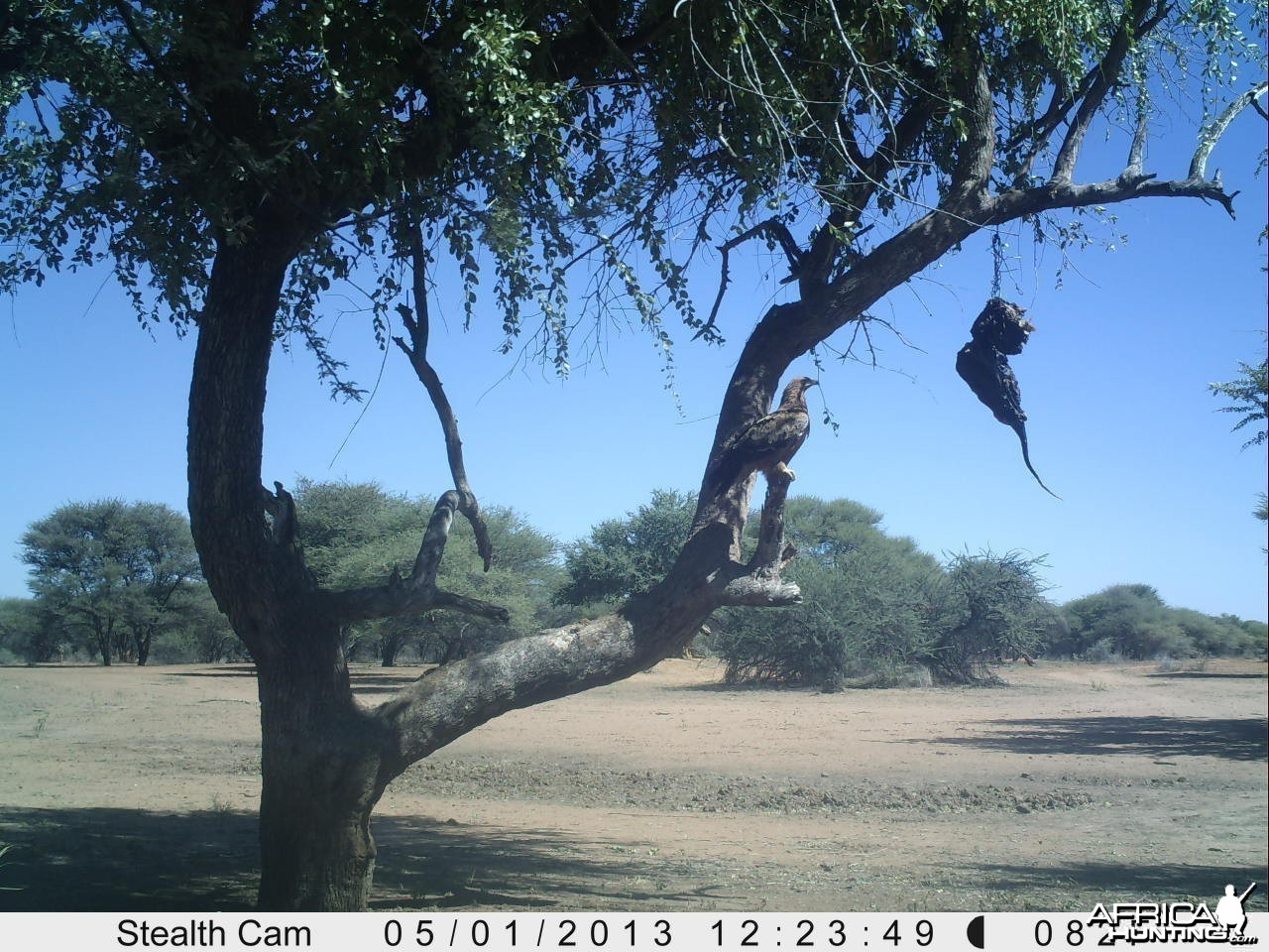 Eagle Trail Camera