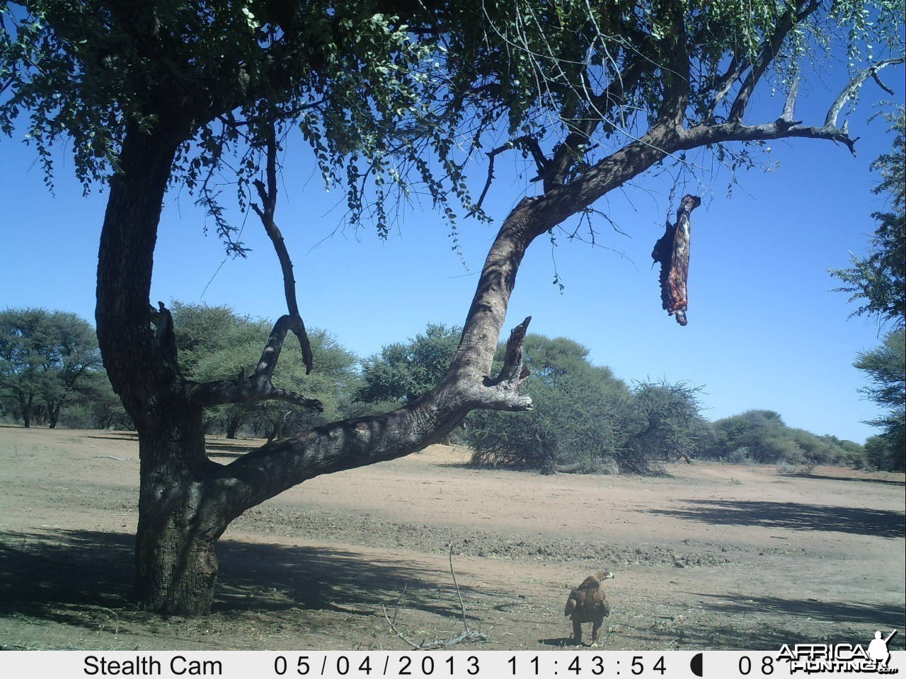 Eagle Trail Camera
