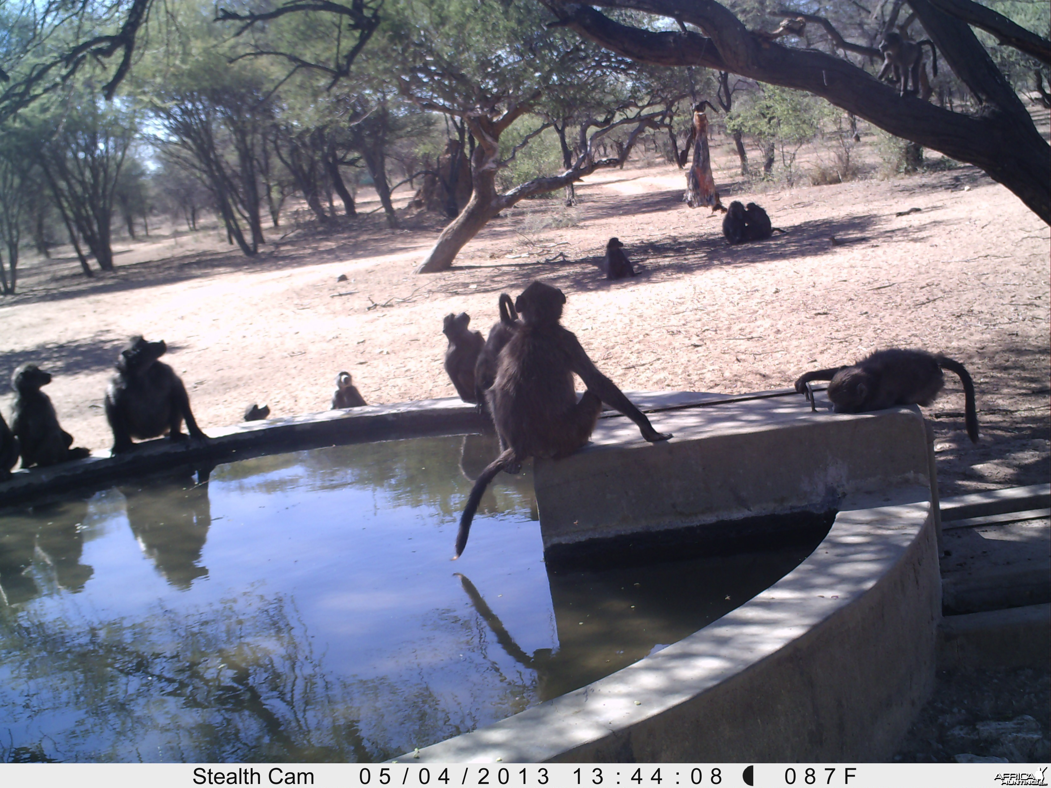 Baboon Trail Camera