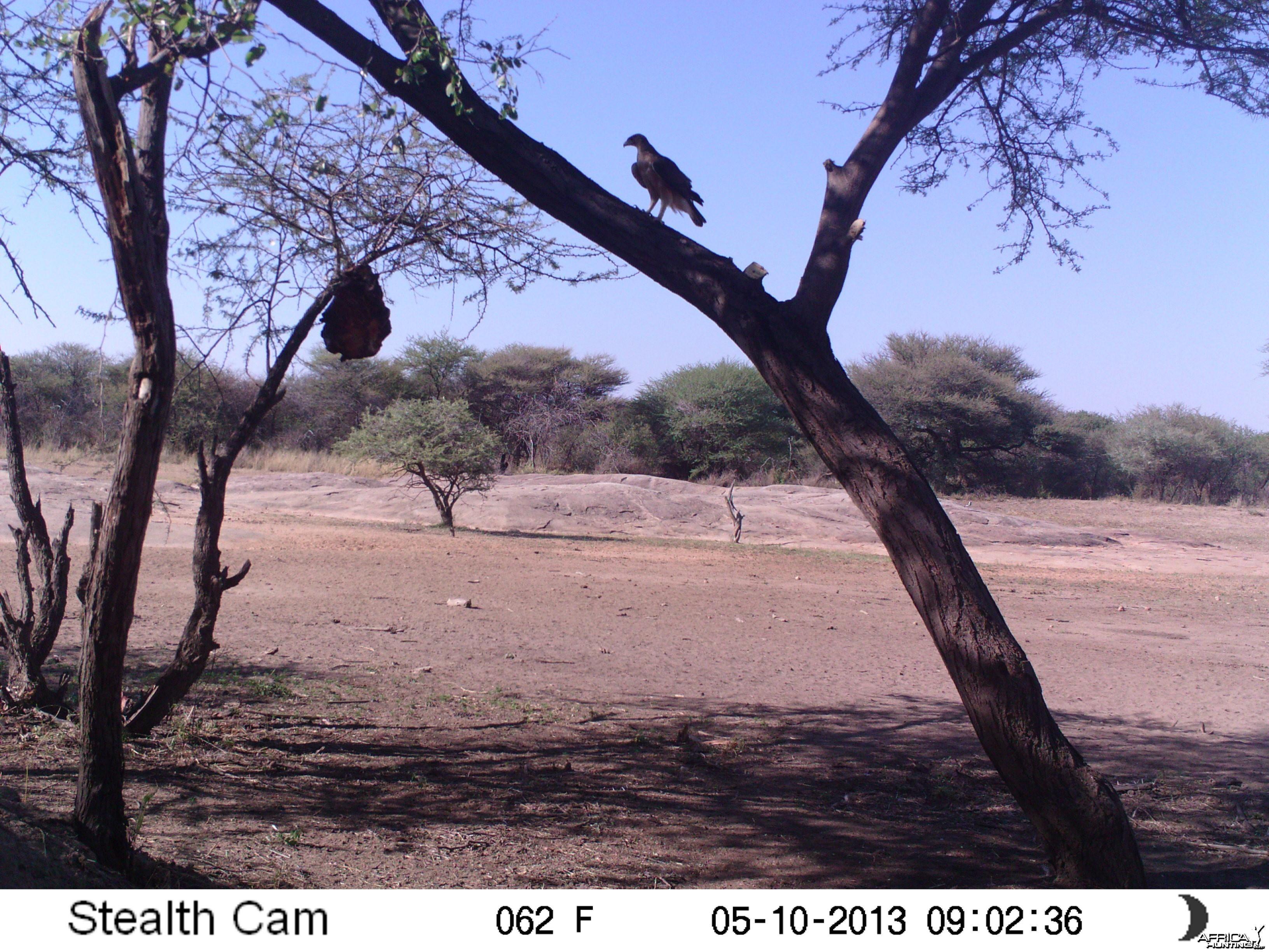 Bird of Prey Trail Camera