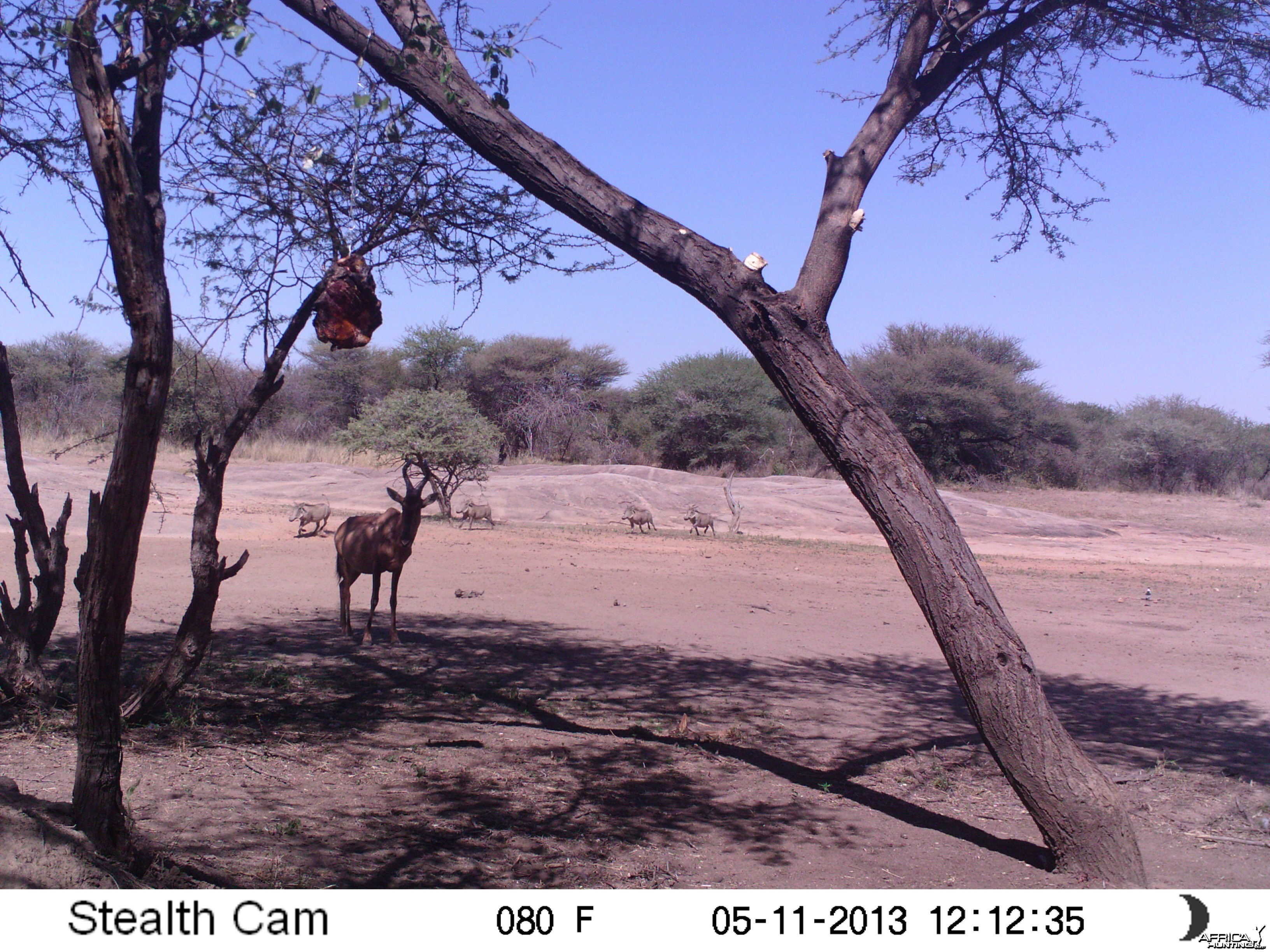 Red Hartebeest Trail Camera