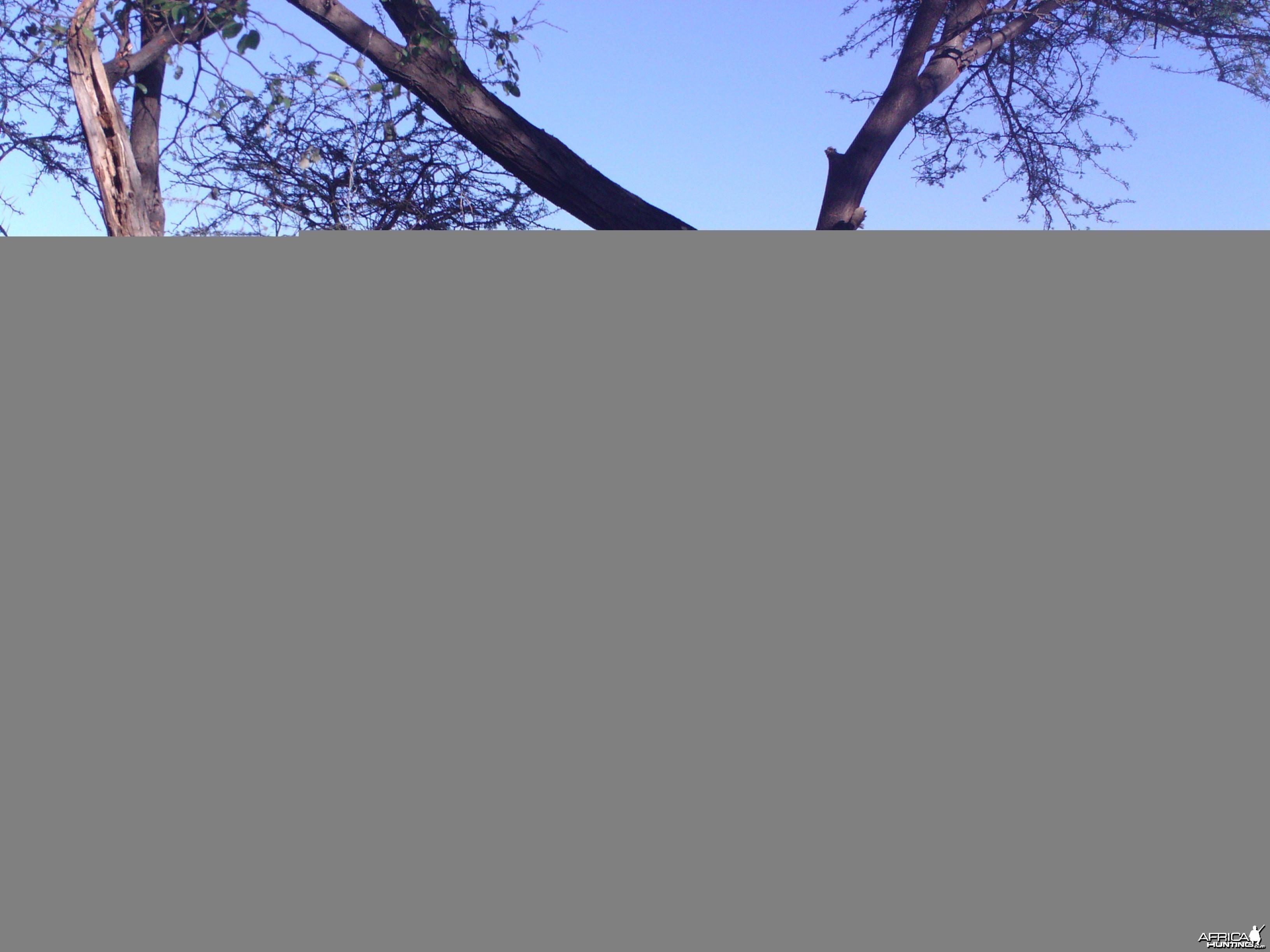 Gemsbok Trail Camera