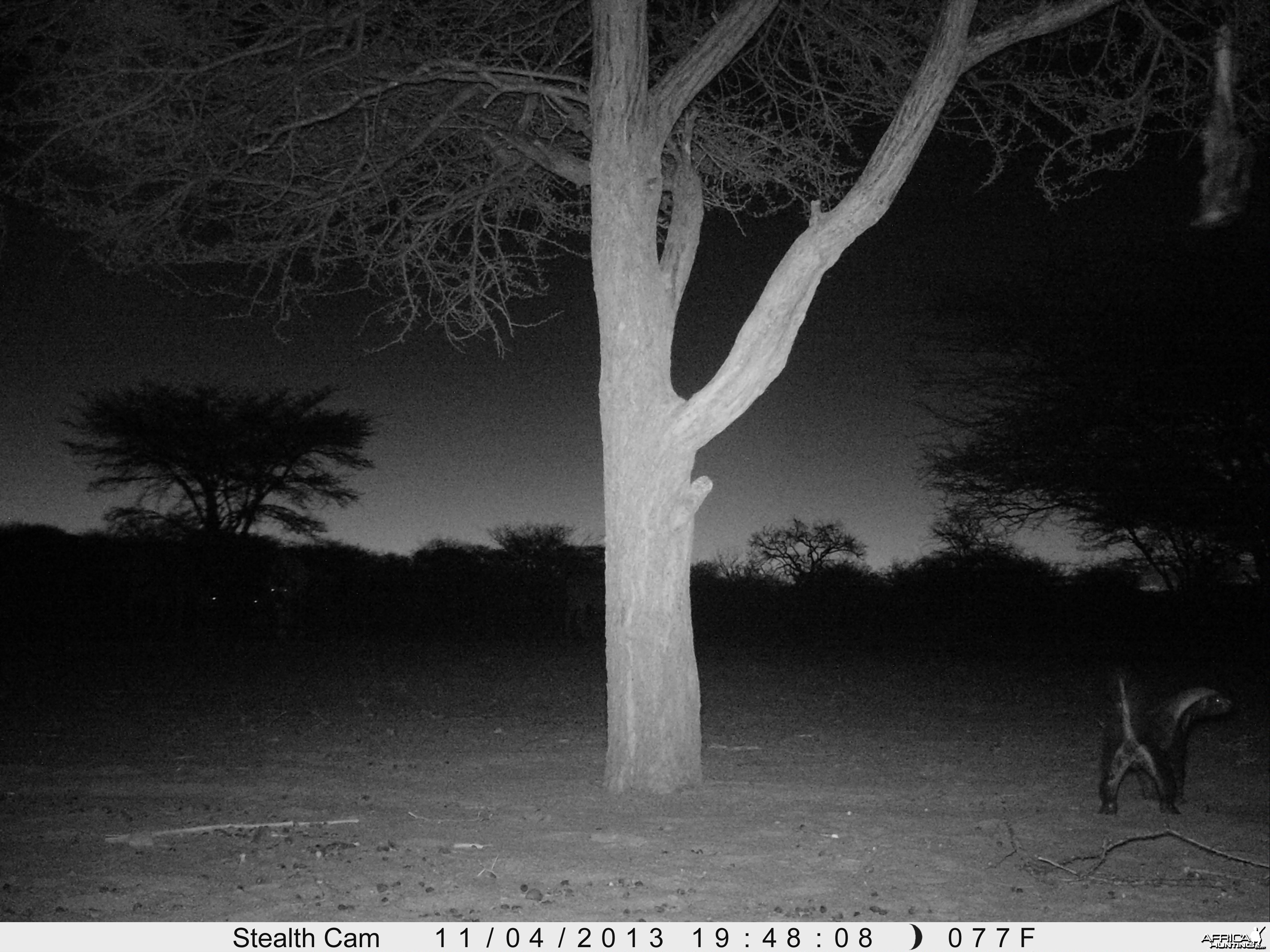 Honey Badger Trail Camera