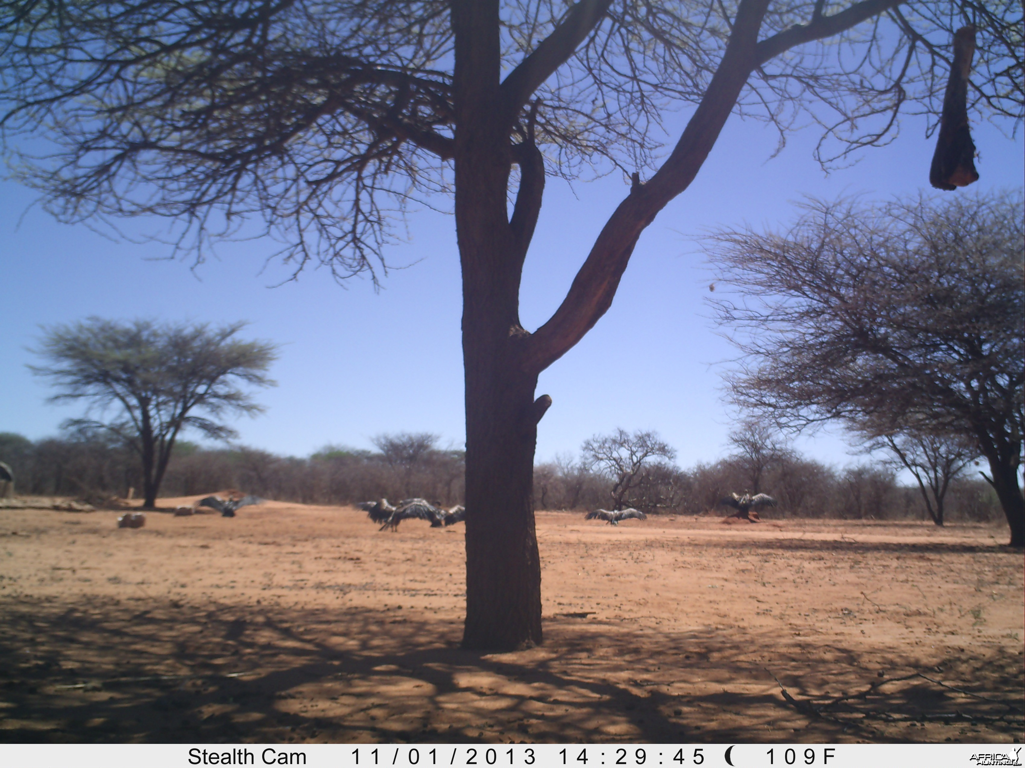 Vultures Trail Camera