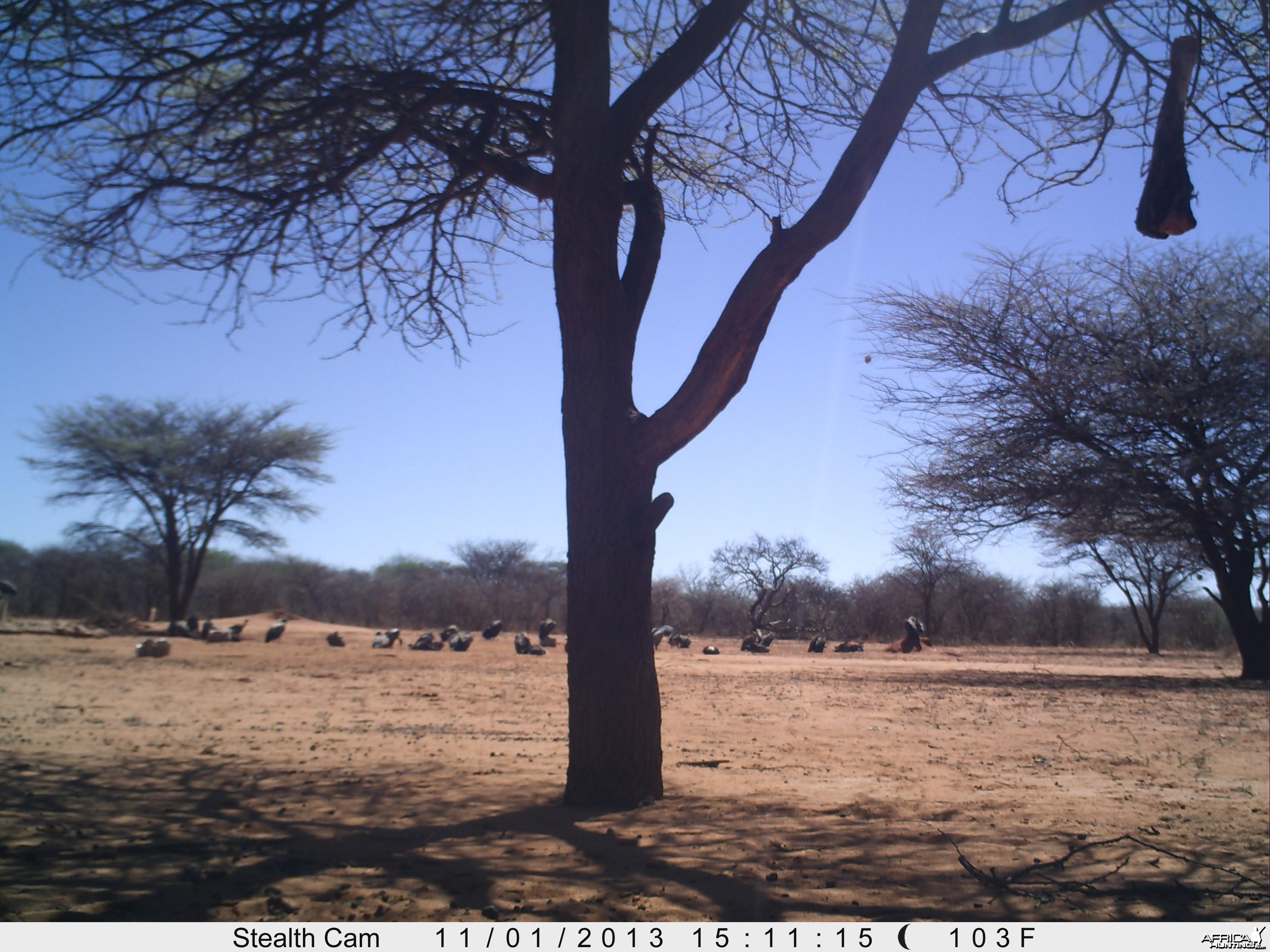 Vultures Trail Camera