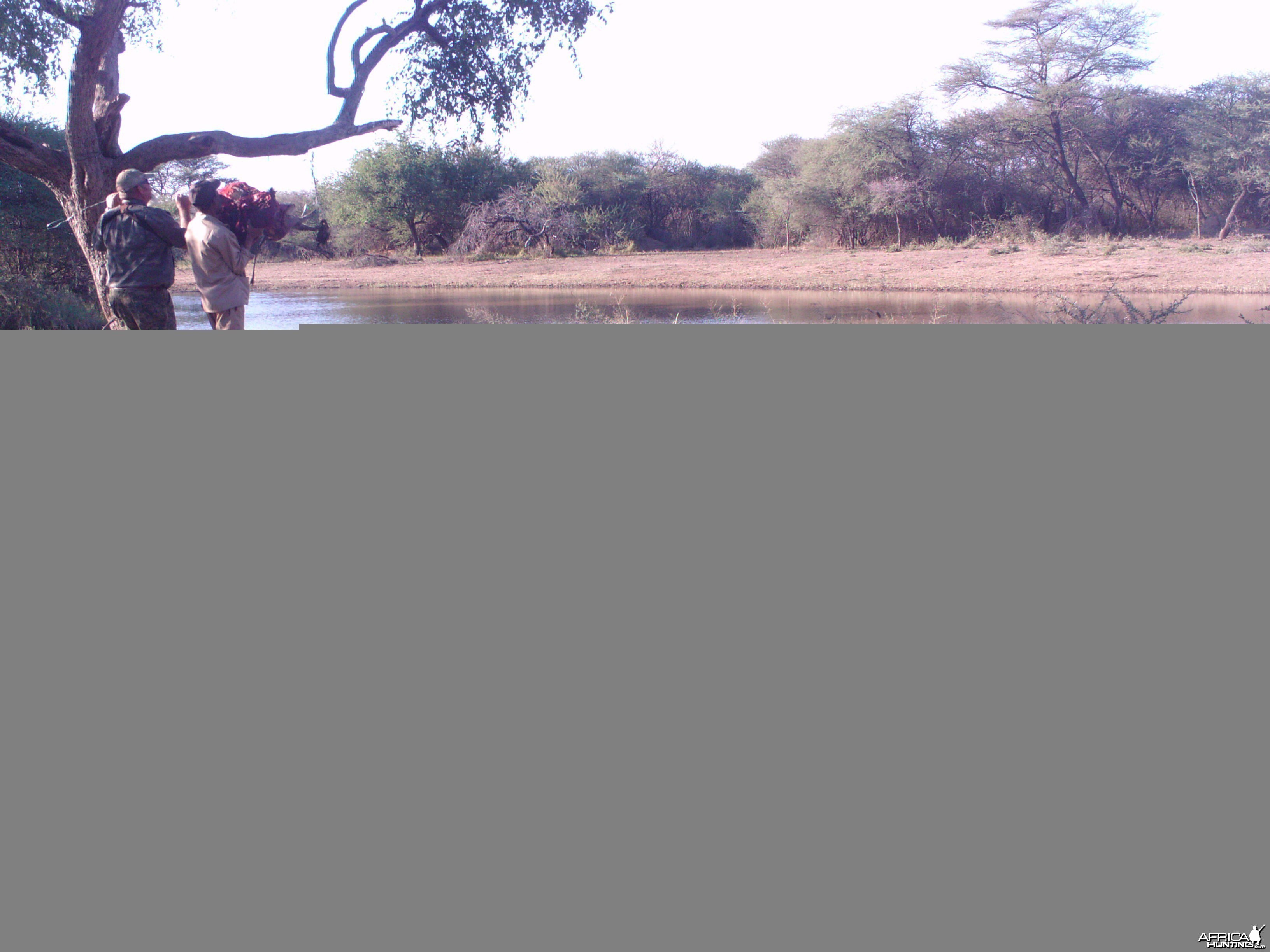 Checking Leopard Bait Trail Camera
