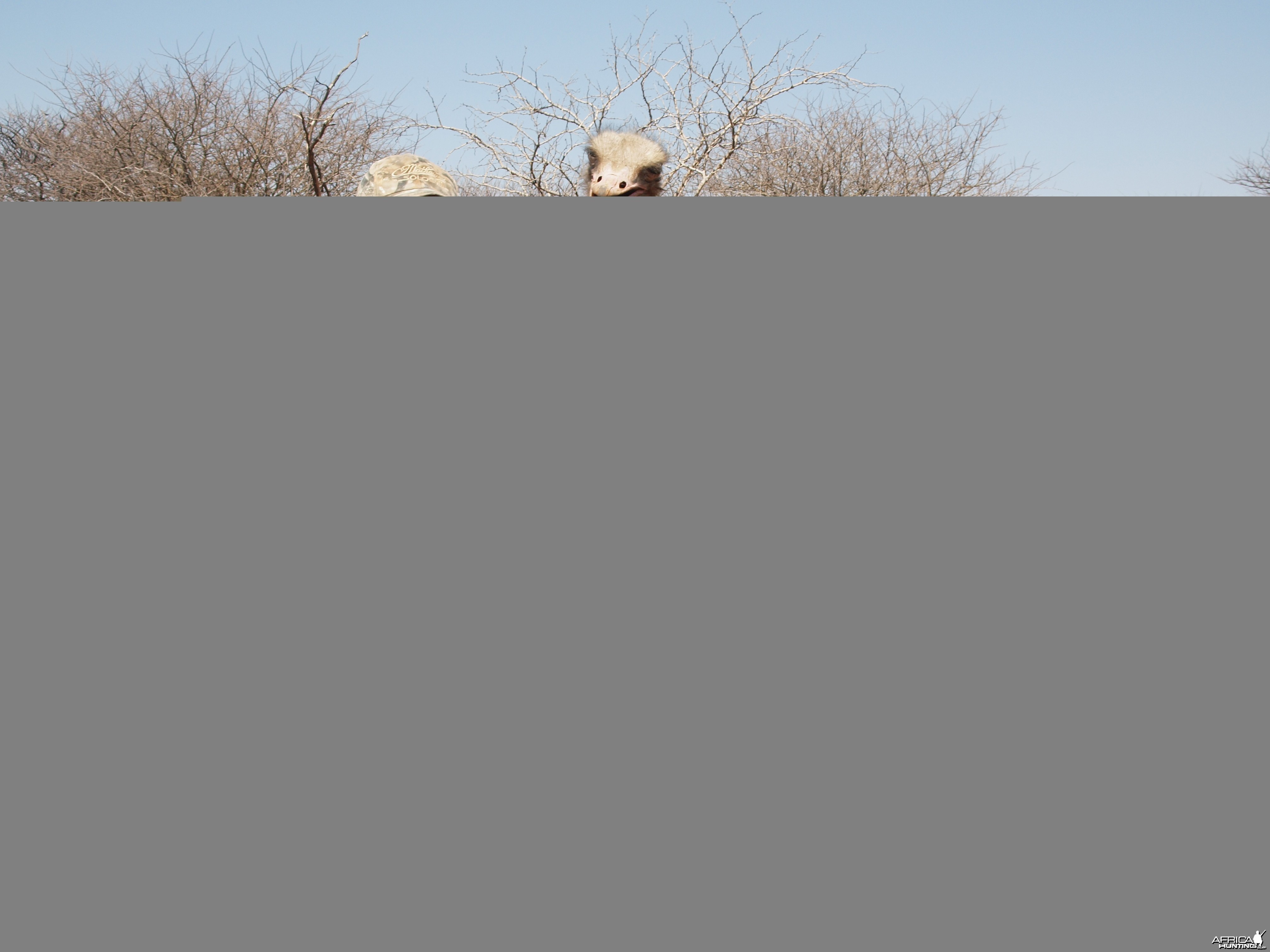 Ostrich hunted with Ozondjahe Hunting Safaris in Namibia