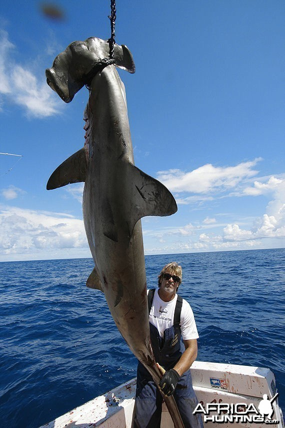 Fishing Hammerhead
