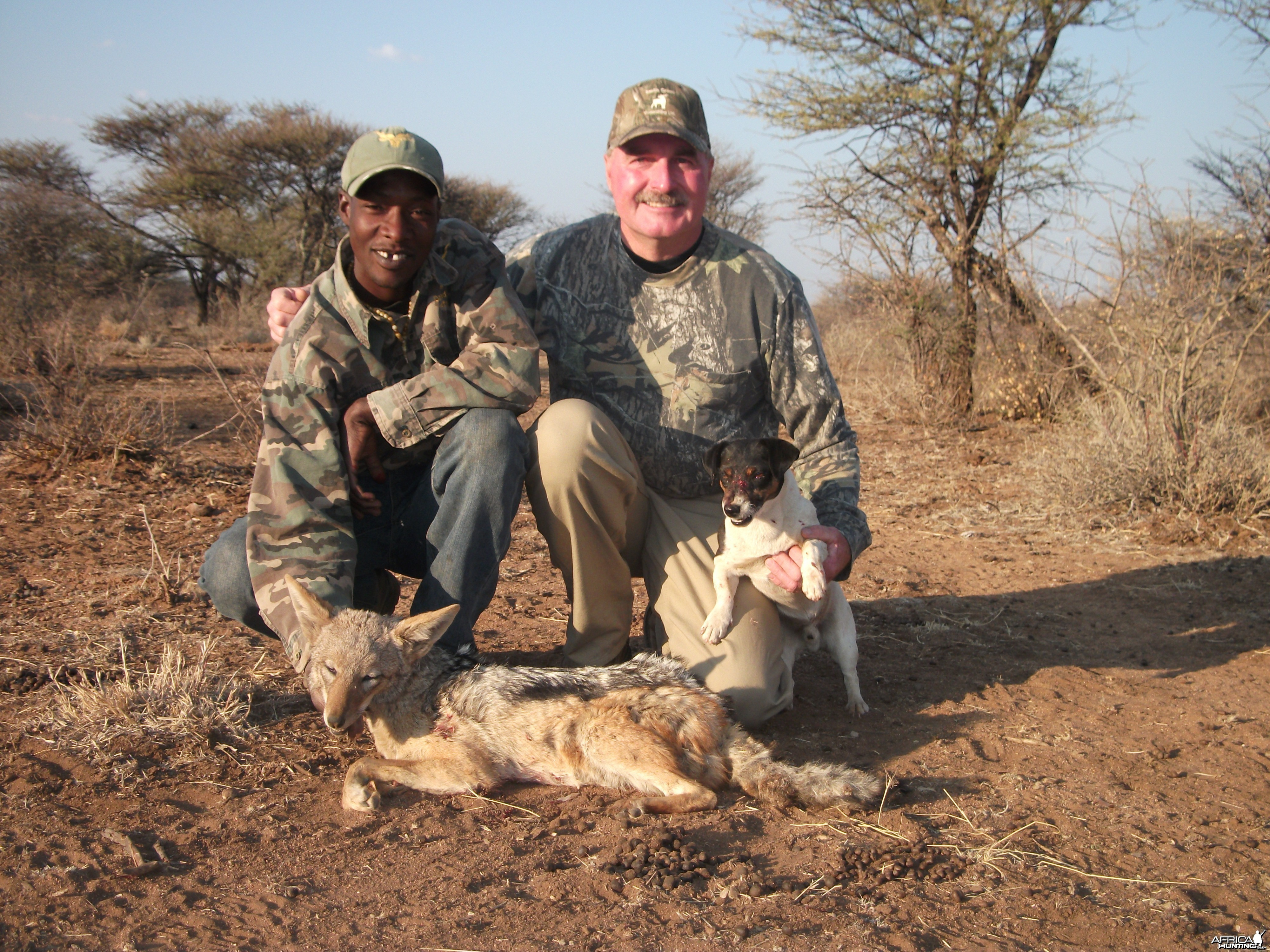 Black-Backed Jackal hunted with Ozondjahe Hunting Safaris in Namibia