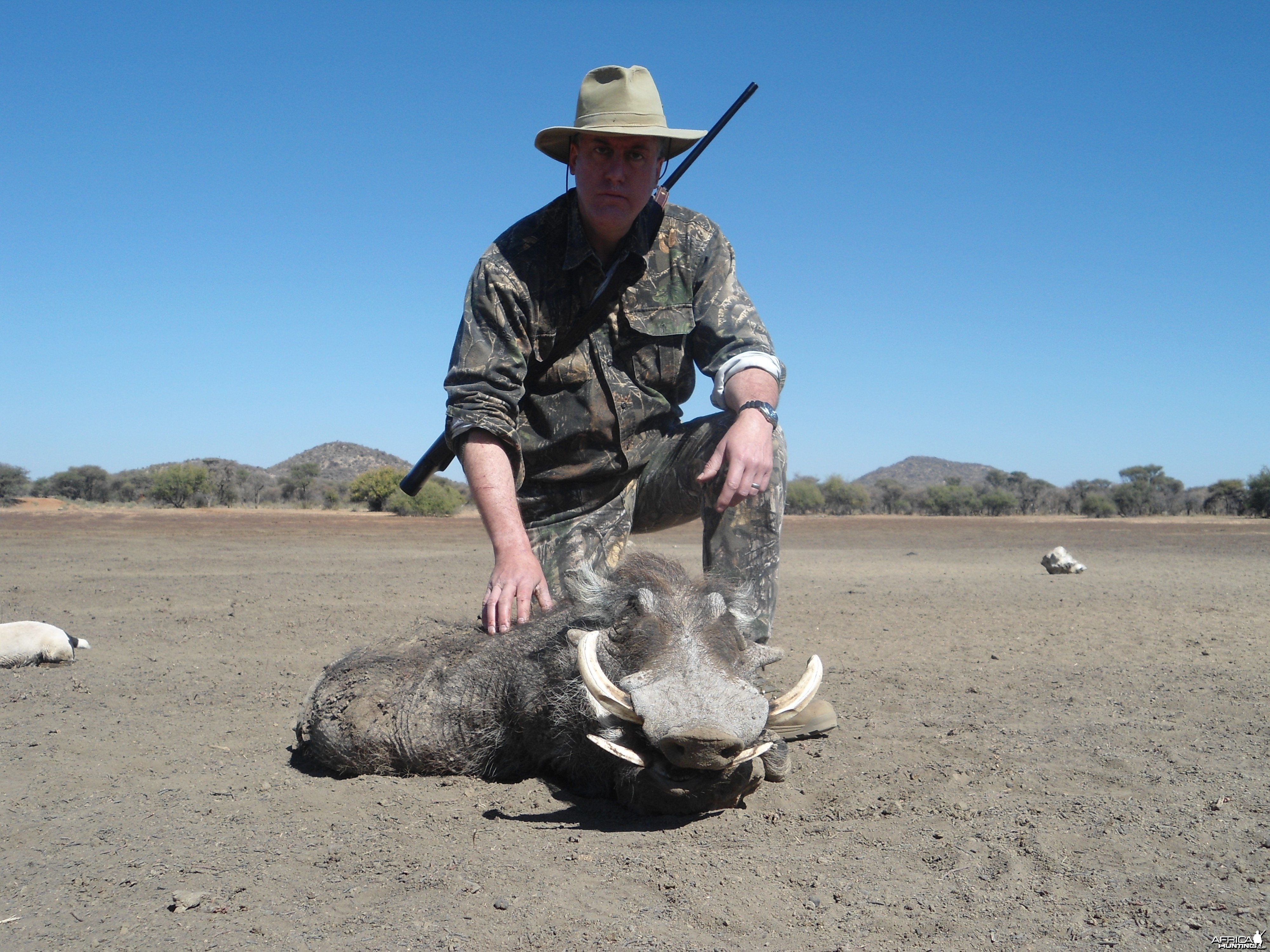 Warthog hunted with Ozondjahe Hunting Safaris in Namibia