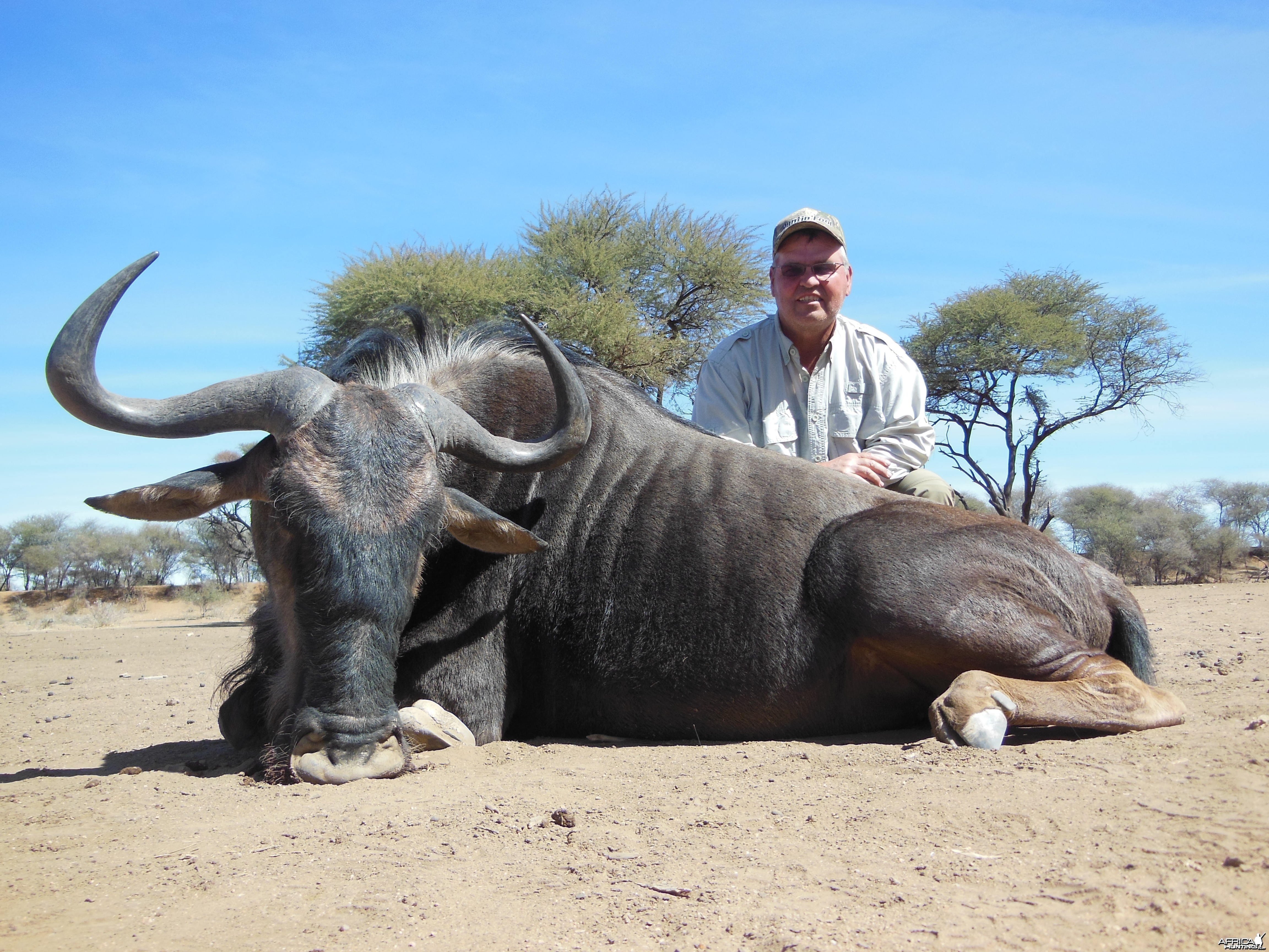 Blue Wildebeest hunted with Ozondjahe Hunting Safaris in Namibia