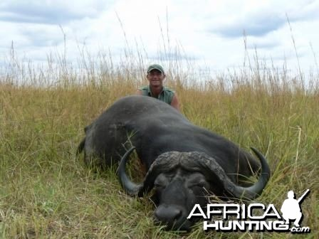 Buffalo hunted in Selous Tanzania