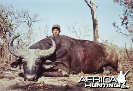 Savanna buffalo - Hunting Benin