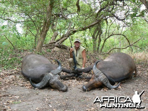 Northwestern Buffalo - Hunting Central africa