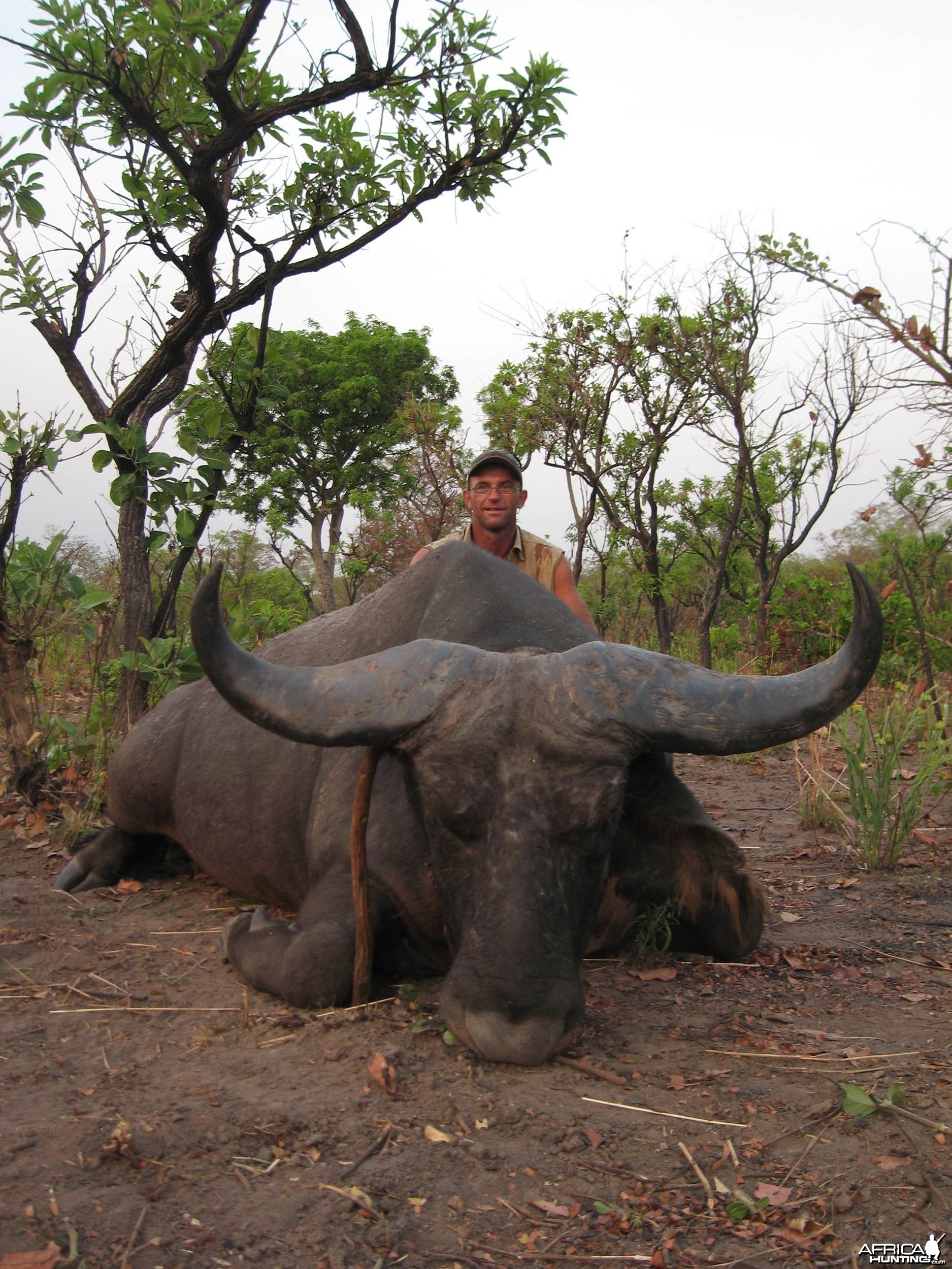 Northwestern Buffalo - Chasse en Centre Afrique