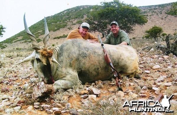 Massive Eland Bull, PH Lammie