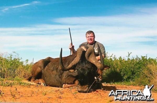 Black Wildebeest, PH Lammie