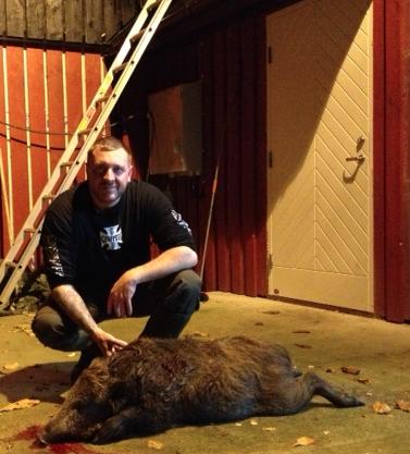 Swedish Wild boar