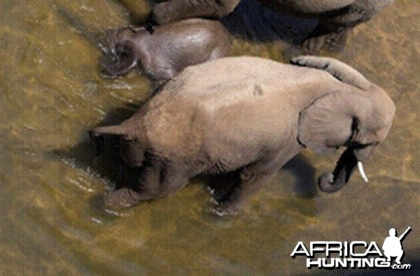 Elephant born in the river in Kruger National Park 2012!