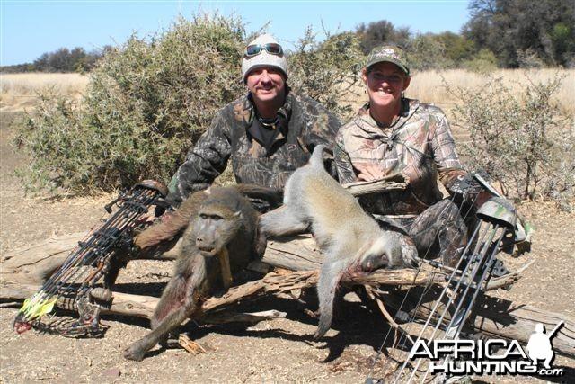 Baboon & vervet Monkey Limcroma Safaris 2013