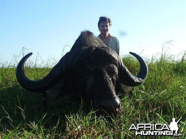 Buffalo Mozambique