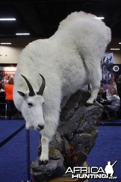 SCI Convention 2014 Taxidermy Mounts