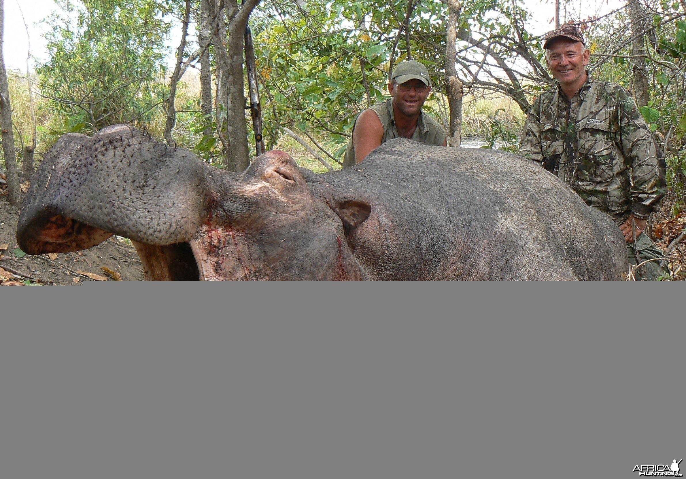 """27"""" hippo bull"""