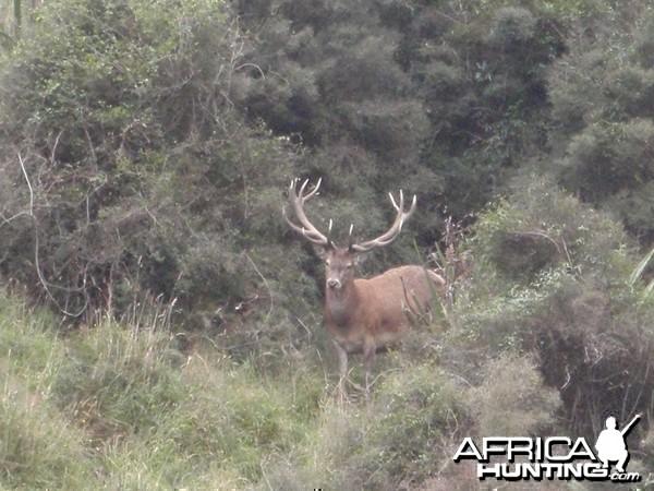 Free Range Hunting New Zealand