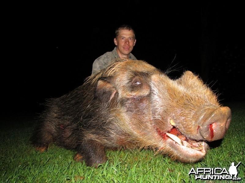 Umdende Hunting Safaris Bushpigs