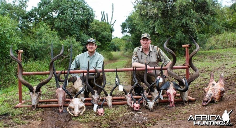 Safaris Horn Collection 2014