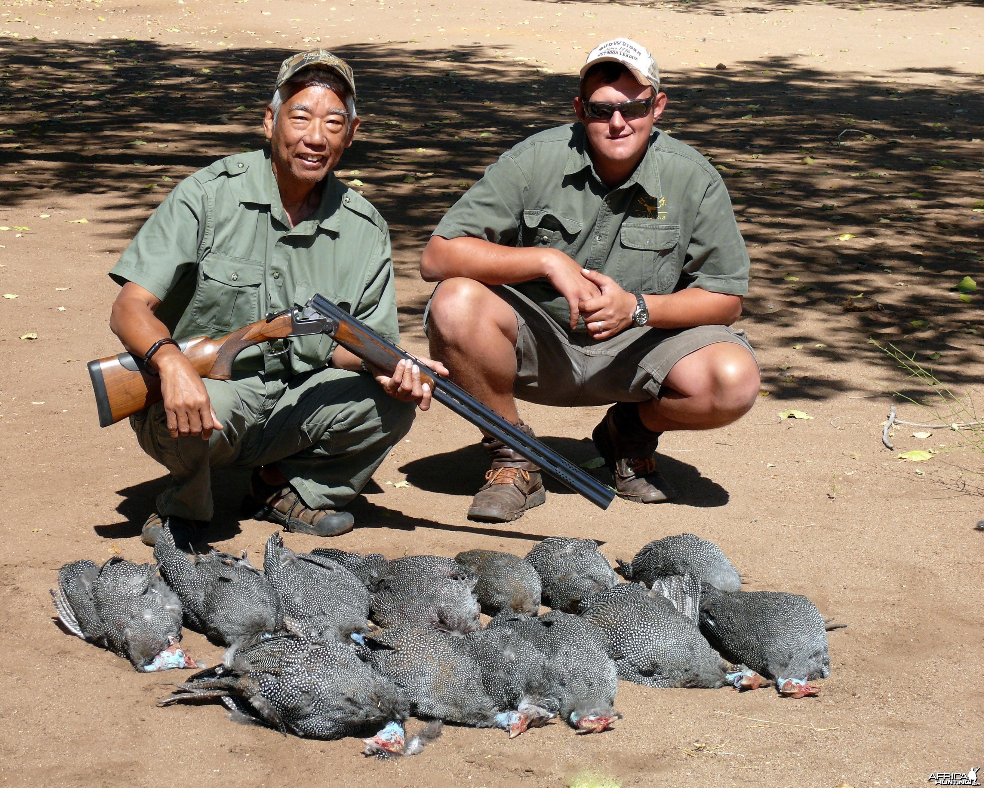 Zimbabwe guinea fowl