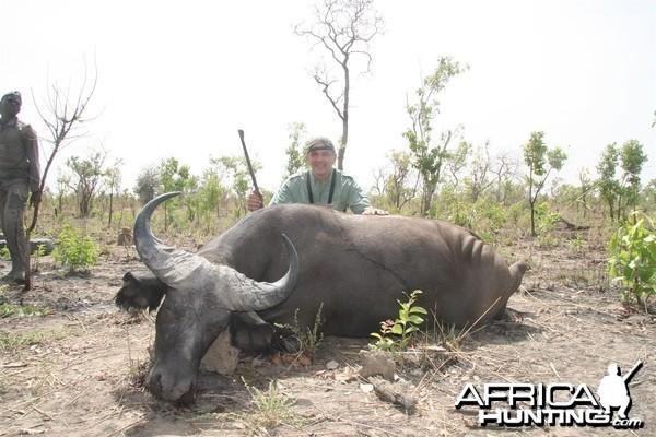West African Savannah Buffalo Burkina Faso