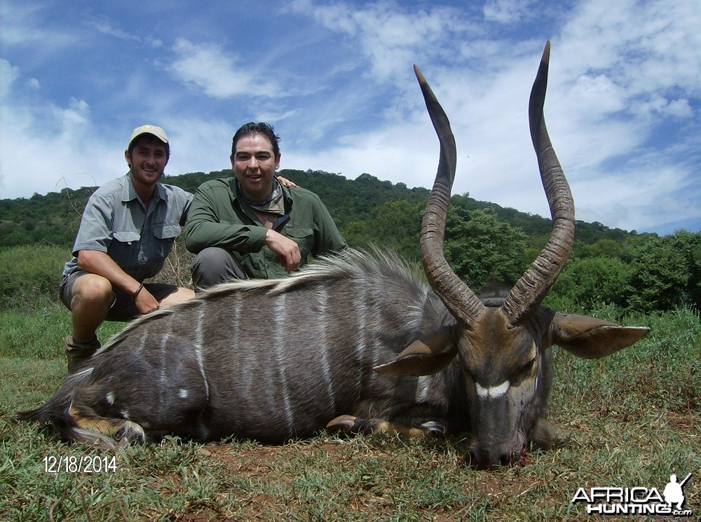 Nyala with Savanna Hunting Safari's
