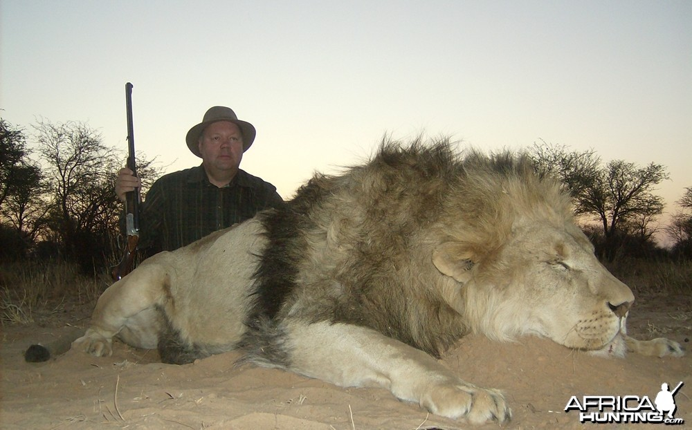 Lion with Savanna Hunting Safari's