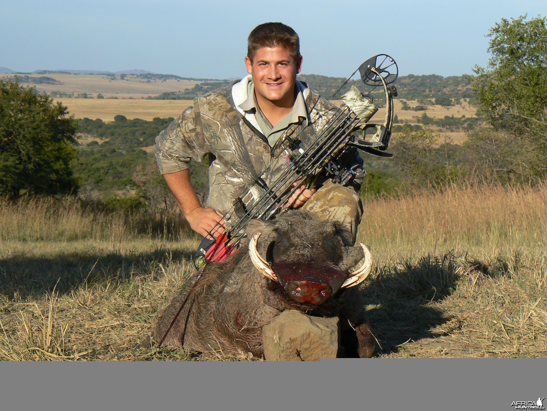 Warthog in Kwa-Zulu Natal