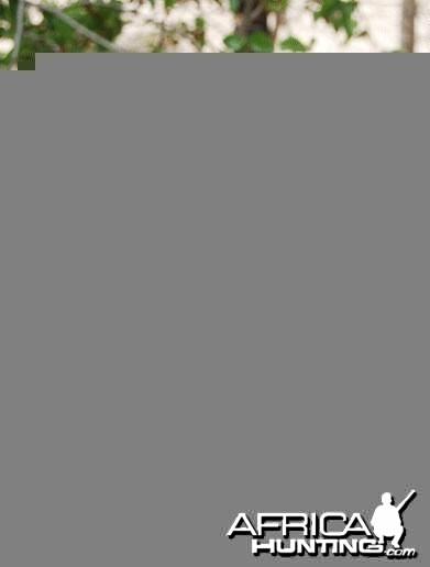 Professional Hunter Ken Stewart (1934 - 2014)