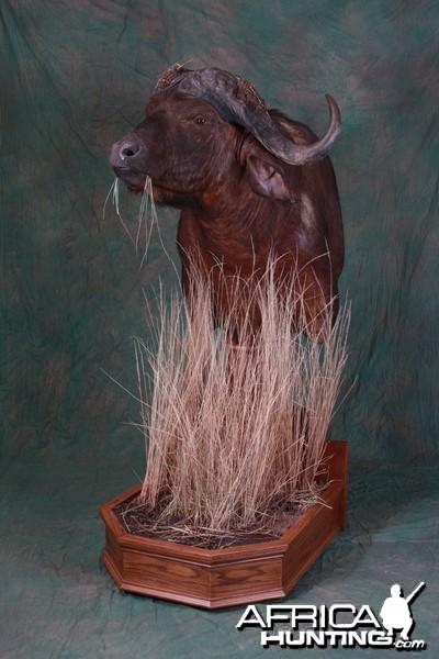 Cape Buffalo Pedestal Mount