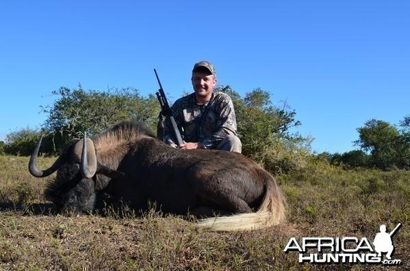 Black Wildebeest KMG Hunting Safaris