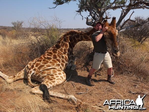 Bull Giraffe Namibia 2012