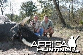Nice Caprivi bull elephant