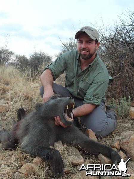 Namibia 2012  Baboon